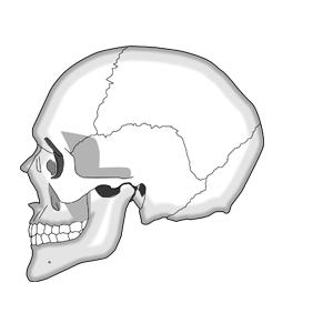 頭蓋骨矯正-こんなお悩みはありませんか?